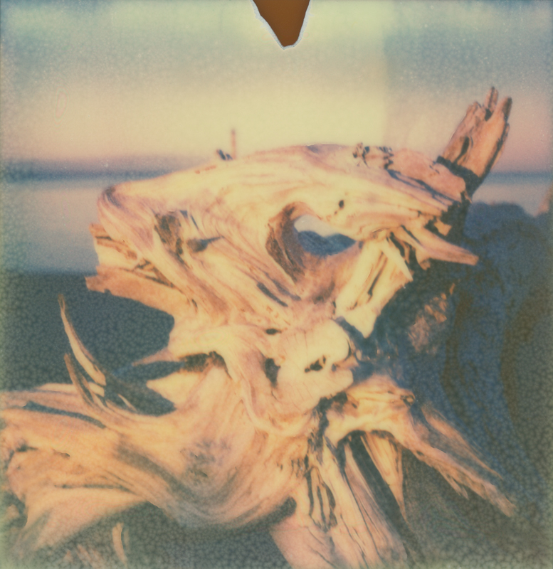 Driftwood Twelve