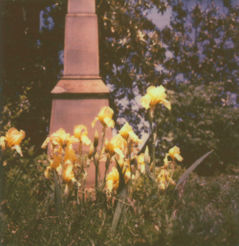 Daffodils and Monuments