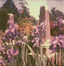 Irises and Monuments